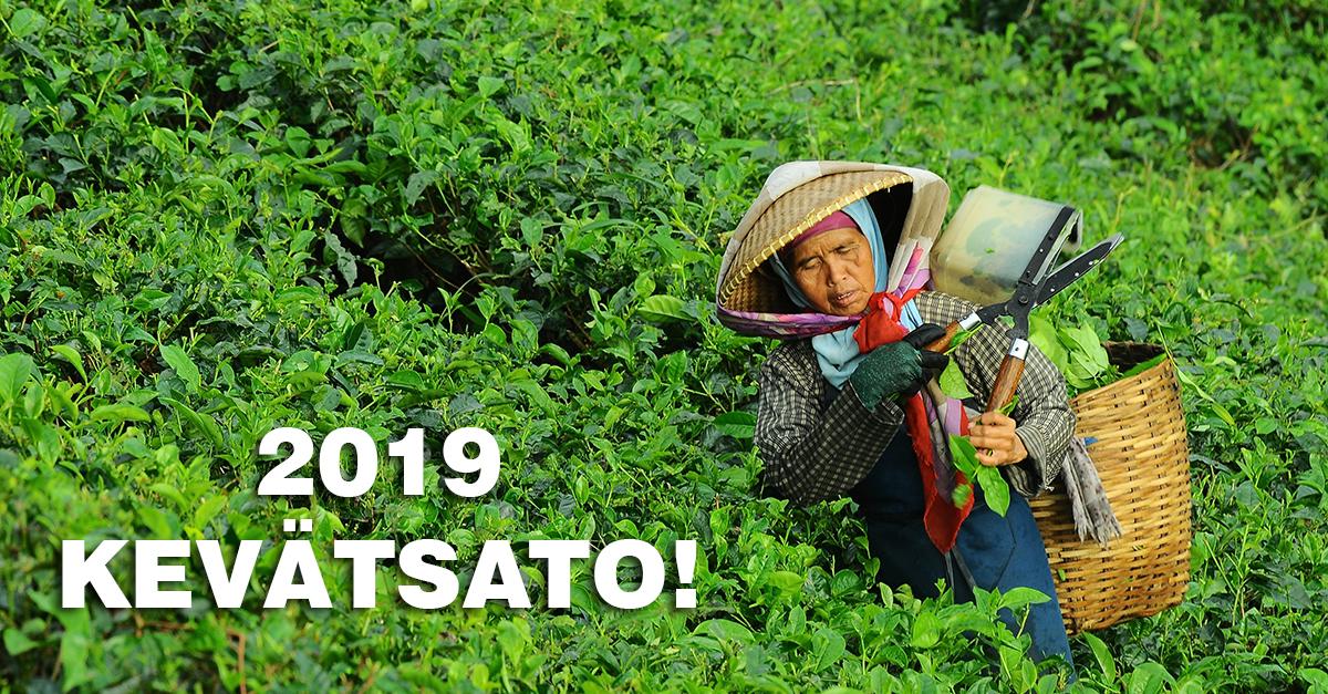 Kevään 2019 ensimmäiset tuoreet teelaadut ovat nyt saatavilla! Maista huipputuoretta japanilaista vihreää teetä tai uskomattoman aromaattista Darjeeling-teetä. Tilaa ja nauti keväästä herkullisen teen kera!