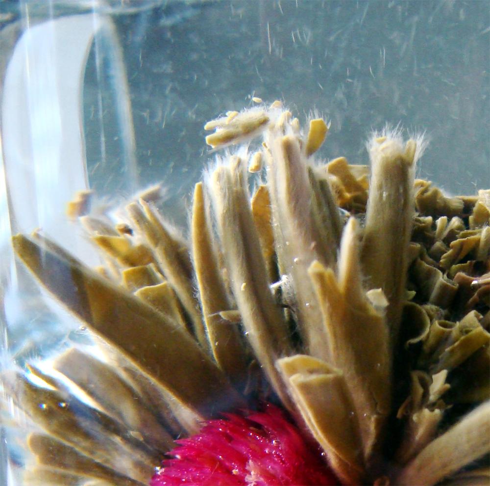 jasmiinitee kukkaistee