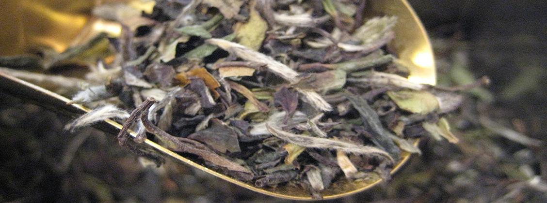 valkoista teetä prosessoitaessa lehtiä ei kuumenneta toisin kuin vihreää teetä